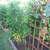 Florida Backyard Vegetable Gardener's avatar