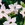 Annuals_nicotiana_x_alata_saratoga_tm_appleblossom-1.sprite