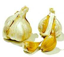 Garlic_and_shallots_allium_ampeloprasum-1.full