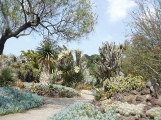 Cactus Garden @ Huntington Gardens
