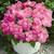 Petunias: Petunia Grandiflora, 'Storm™ Pink'