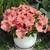 Petunias: Petunia Grandiflora, 'Storm™ Salmon'
