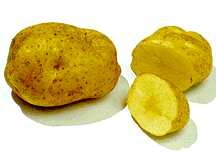 Potato, Yellow Finn