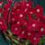 Petunias: Petunia Multiflora, 'Primetime™ Scarlet'