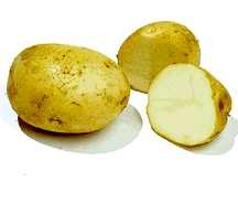 Potato, Kennebec