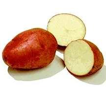 Potato, Dark-Red Norland
