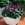 annual salvias: Salvia Splendens, 'Picante™ Light Purple'