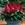 annual salvias: Salvia Splendens, 'Picante™ Scarlet'