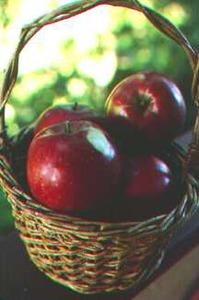 Apple Tree, Semi-dwarf 'Nonesuch' (1830)