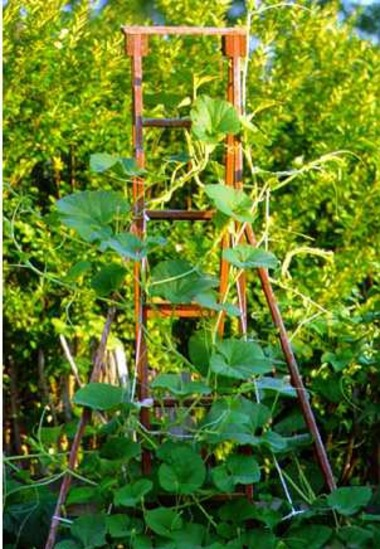 Vertical_gardening.detail