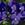 Violas: Viola Cornuta, 'Penny™ Blue'