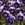 Violas: Viola Cornuta, 'Penny™ Deep Marina'