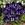 Violas: Viola Cornuta, 'Penny™ Denim Jump Up'