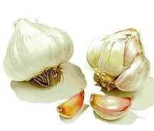 Garlic, California Late