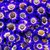 Cineraria: Pericallis cruenta 'Venezia™ Blue With Ring'