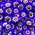 Annuals_pericallis_cruenta_venezia_tm_blue_with_ring-1.small