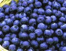 Blueberry, 'Bluecrop'