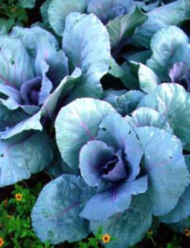 Cabbages.detail