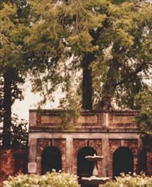 Hackberry Tree, Edgar Allen Poe