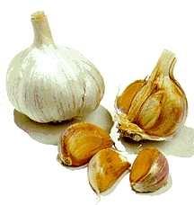 Garlic, Spanish Roja