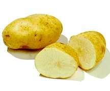 Potato, Shepody