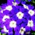 Verbenas_verbena_x_hybrida_obsession_tm_blue_with_eye-1.small