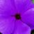 Vinca: Catharanthus Roseus, 'Sunshower™ Lilac'