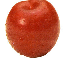 Plum Tree, Redheart standard
