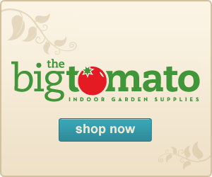 Big_tomato_banner_ad