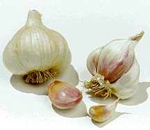 Garlic_and_shallots_allium_sativum_silver_rose-1.full