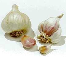 Garlic, 'Silver Rose'