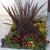 Perennials: Phormium tenax 'Atropurpureum'