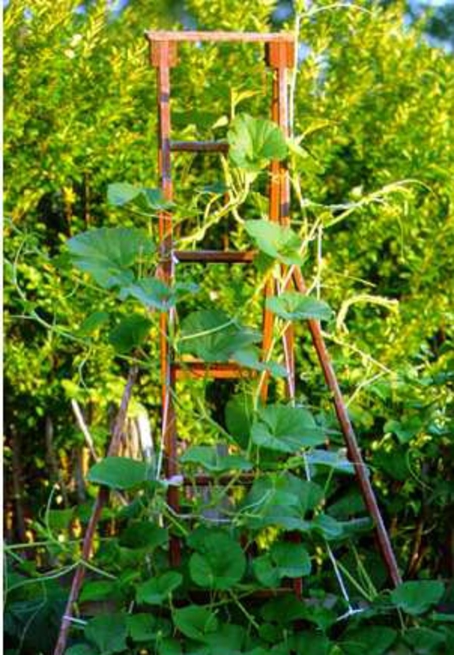 Vertical_gardening.full
