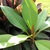 Plumeria_122709.small
