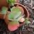 Succulent_122709.small