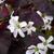 Shamrock_122709.small