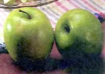 Apple Tree, Semi-dwarf 'Granny Smith'