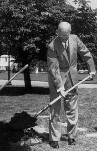 Green Ash Tree, Eisenhower