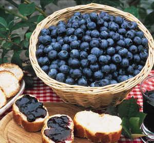 Blueberry, 'Tifblue' (Rabbiteye Type)