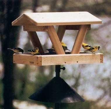 Bird_feeder.detail