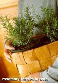 Growing_herbs.large