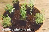 Herbs-three.full