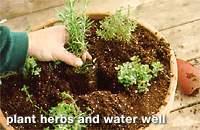 Herbs-four.full