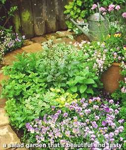 Salad_garden.detail