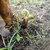 Baby_banana_plant.small