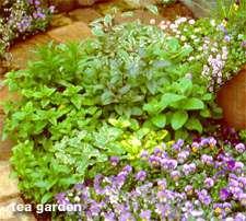 Tea-garden.detail