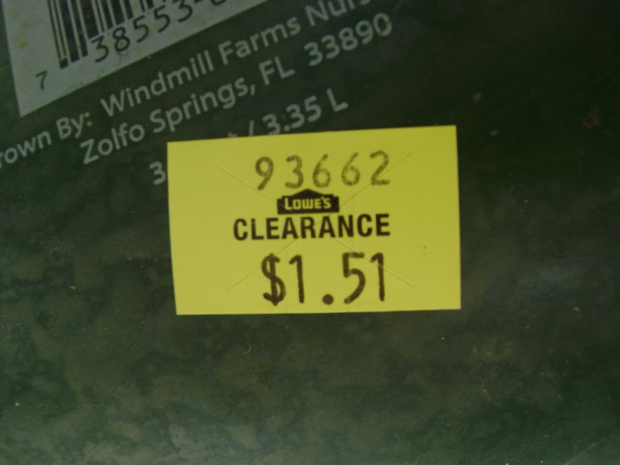 1-25-10_sale_price_.full