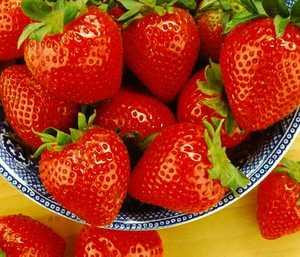 Strawberry, Tristar