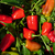 Peppers_capsicum_annuum_cajun_belle.small
