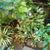 My_garden.small